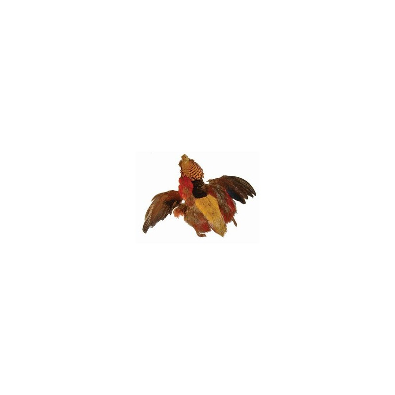 Zlati fazan